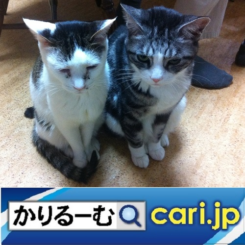 two_cats_hana_suzu